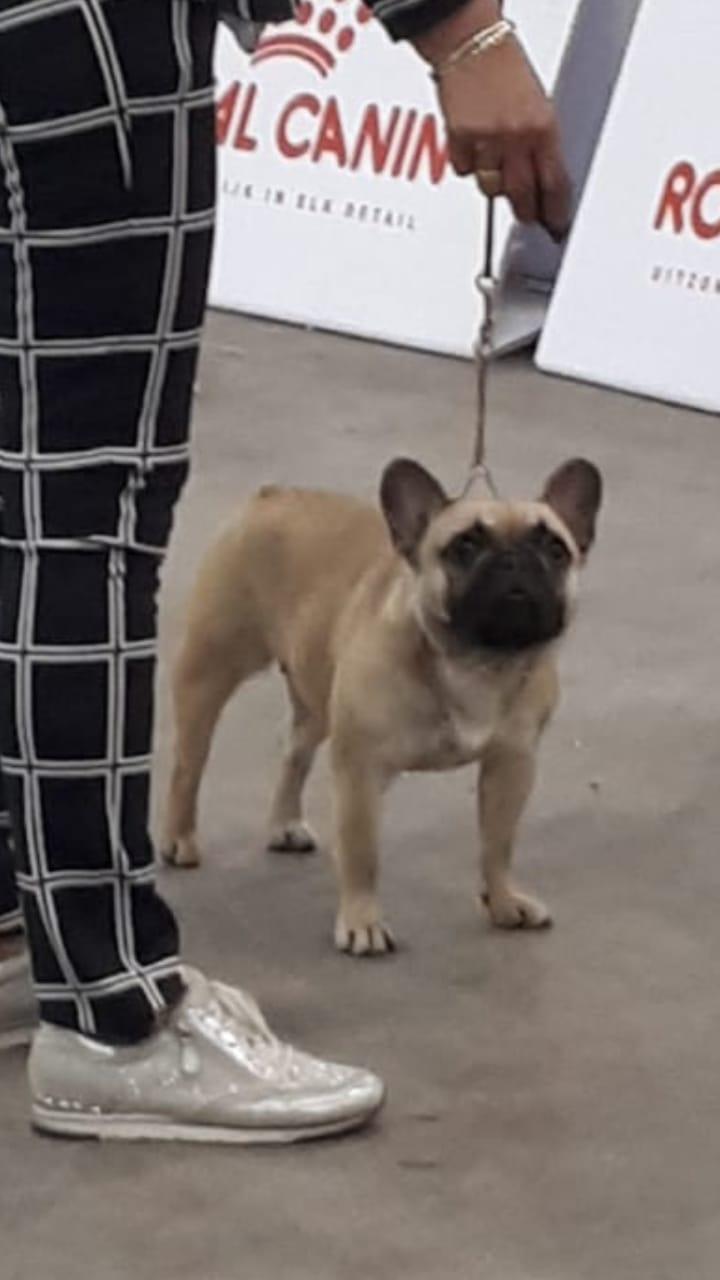 Dogshow Oss 25 mei 2019 Jeugdklasse. Keurmeester M. Nikic. Charlene van Odijkershof (Charly) behaalde een prachtige Uitmuntend.